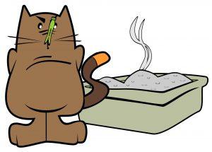 cat litter box hygiene