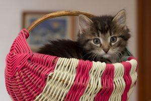 kitten small space